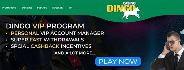 Dingo VIP promotions
