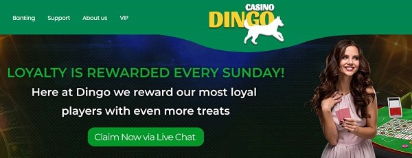 Dingo Loyalty Rewards